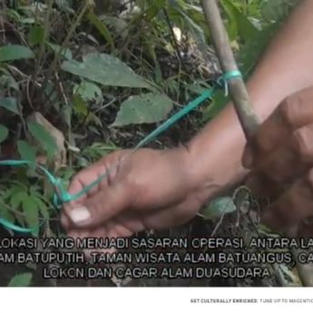 BKSDA Sulut Sita Ratusan Jerat Pemburu Satwa Liar di Cagar Alam Sulut