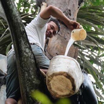 Ragam Minuman Fermentasi Beralkohol Khas Nusantara
