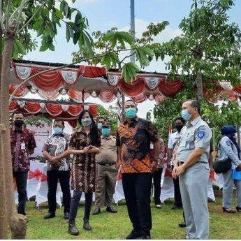 Manfaat Pohon Pule dan Tabebuya yang Mulai Ditanam di Kota Semarang