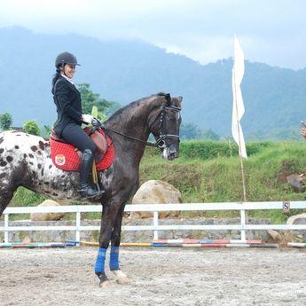 Menikmati Destinasi Wisata Berkuda di Sentosa Stable Boja, Jateng