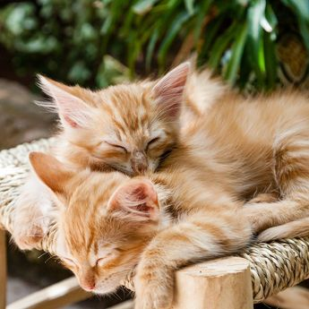 Masih Bisa Diselamatkan? Ini 7 Tanda Kucing Mau Mati yang Wajib Diketahui Pemiliknya