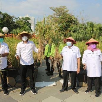 Panen di Tengah Kota Surabaya, Taman Surya Hasilkan 72 Kilo Padi