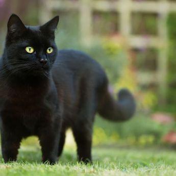 Tak Hanya Kucing Hitam, 5 Hewan Ini Dipercayai Pertanda Nasib Buruk Hingga Kematian