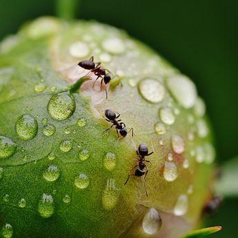 Oh Ternyata Ini Alasan Mengapa Semut Suka Berhenti saat Bertemu