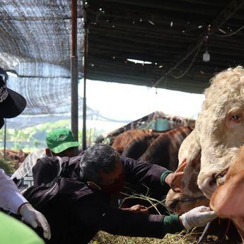 Pastikan Kesehatan Hewan Kurban, Pemkot Surabaya Turunkan Tim Pemeriksaan Lapak