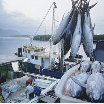 Masa Pandemi Covid-19, Ekspor Ikan Alami Kenaikan hingga 18,71 Persen