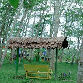Cobain Suasana Baru, Camping di Hutan Albasia Kuala Dua Kubu Raya