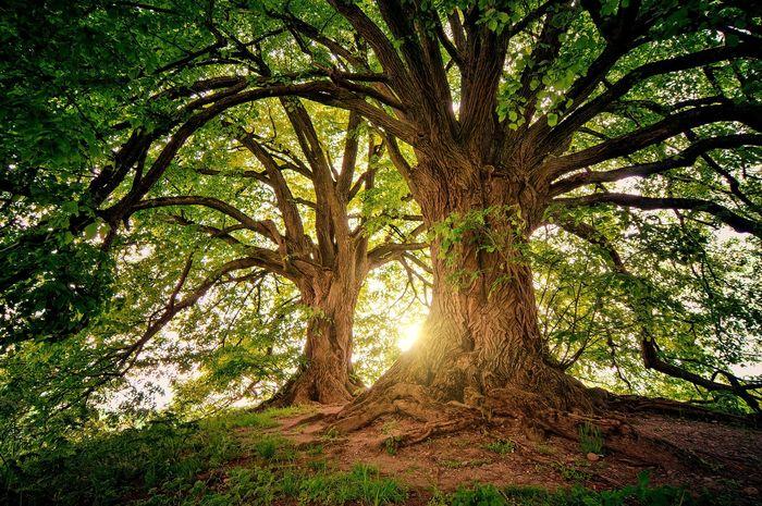 jenis pohon yang bisa datangkan rezeki