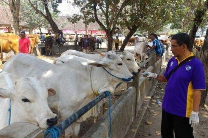 DPKP Palembang Minta Penjual Hewan Kurban Lebih Transparan ke Konsumen