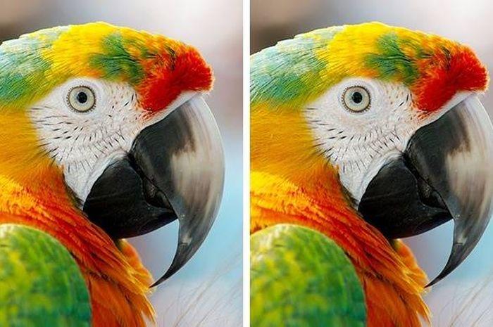 Tes Ketajaman Otak dan Kejelian Mata, Coba Cari Perbedaan Gambar Berikut, Kamu Bisa?