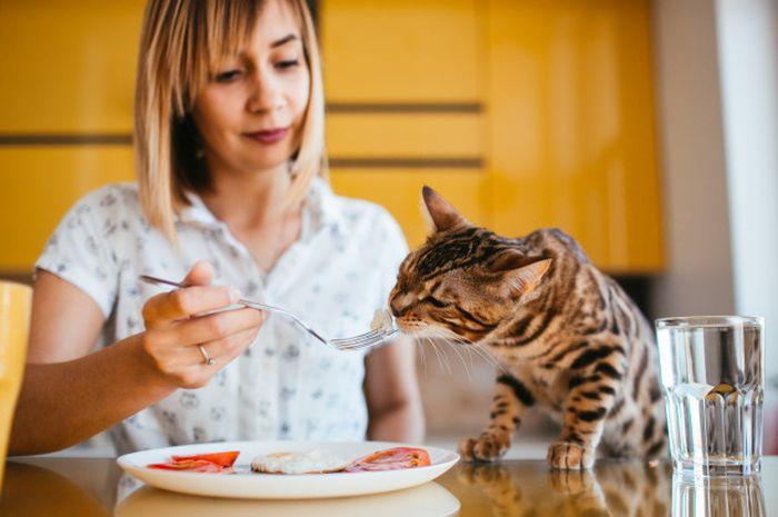 Illustrasi memberi makan kucing
