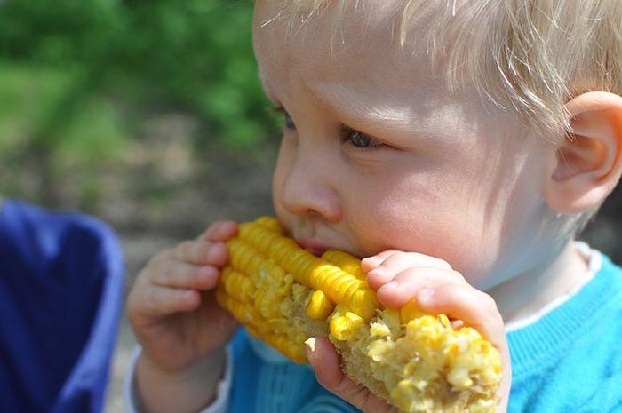 Ilustrasi seorang anak sedang makan jagung rebus