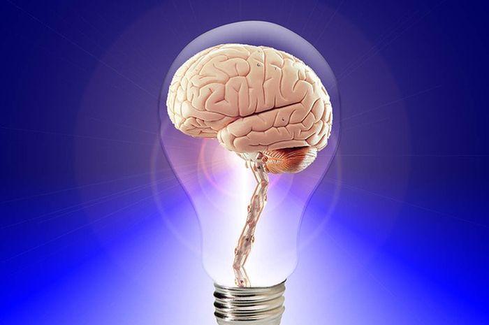 Ilustrasi otak manusia