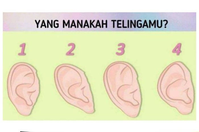 Tes Kepribadian bentuk telinga