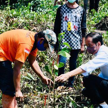 Presiden Jokowi Ingatkan Pentingnya Rehabilitasi Mangrove untuk Mitigasi Perubahan Iklim