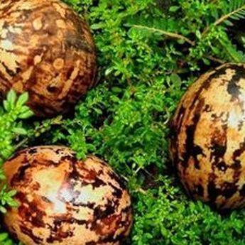 Telur Asap Lurik Khas Pati, Inovasi Telur Asin Melalui Proses Pengasapan